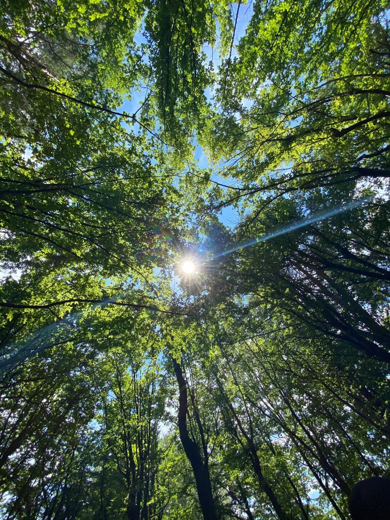 bosco diodona